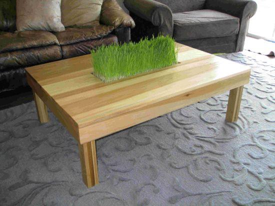 Столик, из столешницы которого растет живая трава.