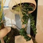 Комнатные растения, идеи для дома, интерьер, коттеджный поселок, Коттеджные поселки эконом