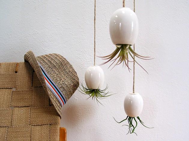 Комнатные растения в подвесных горшках