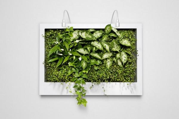 Настенные висячие сады из живых растений
