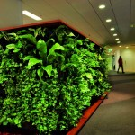 Оформление офиса домашними растениями