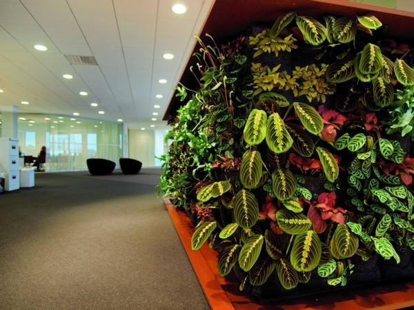 Озеленение офиса, ресепшн