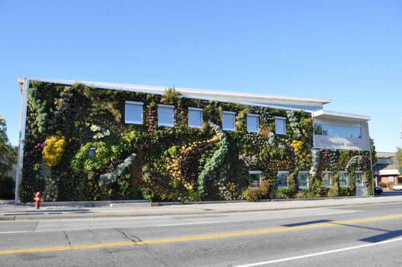 Вертикальное озеленение фасадов зданий