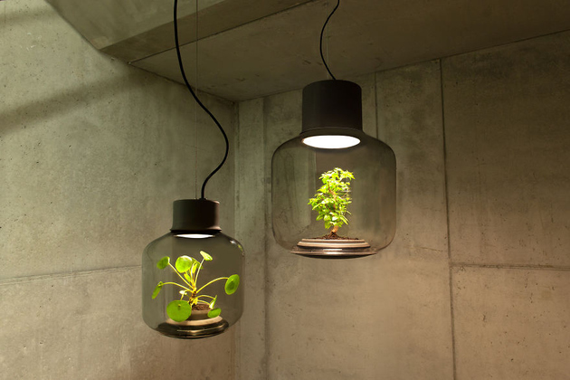 Живые растения в лампе