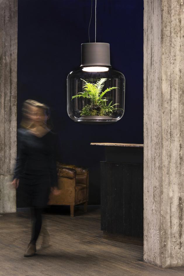 Офисные растения в закрытом сосуде