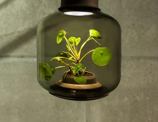 Живые растения в подвесном светильнике